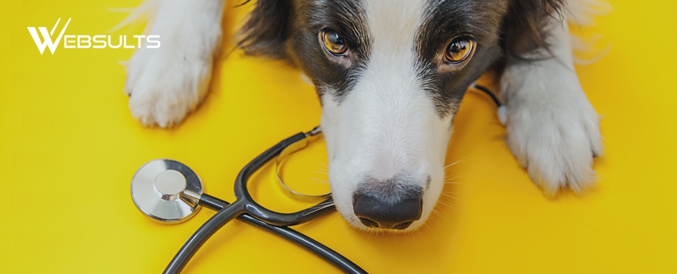 Dog laying near a stethescope